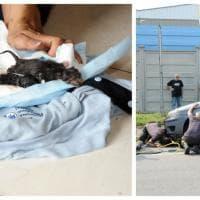 Milano, mamma gatta partorisce nel vano motore dell'auto: il salvataggio dei piccoli