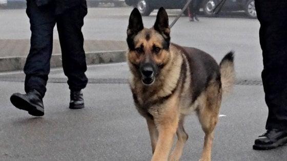 "Fascismo, il cane antidroga del Comune si chiama ""Decim"