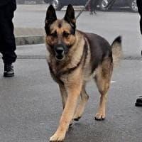 Fascismo, il cane antidroga del Comune si chiama