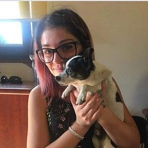 """Cercano per 4 anni il cane scomparso: """"Pepe"""" ritrovato in un canile nel Milanese"""