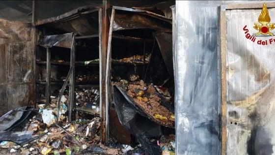 Rho, incendio distrugge il gattile: morti oltre 100 mici
