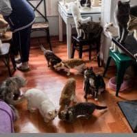 Bergamo, troppi gatti in casa: arriva il veterinario, lo minaccia con un coltello