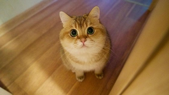 """Lecco, l'Enpa denuncia: """"La killer dei gatti ha adottato un cucciolo di tre settimane, salvato in extremis"""""""