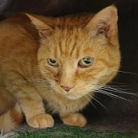 Brescia, il gatto Silvio veglia il padrone morto per tre settimane. E ora torna dalla donna che lo salvò appena nato