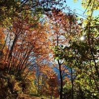 Sondrio, passeggiata d'autunno in Valmalenco: tutti i colori del foliage