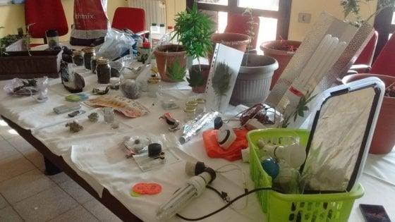 Varese, una serra di marijuana nel sottotetto: arrestato 19e