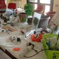 Varese, una serra di marijuana nel sottotetto: arrestato 19enne