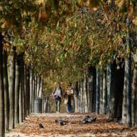 Lo spettacolo del foliage nei parchi e nei giardini di Milano