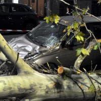 Forte vento a Milano e provincia: cadono alberi, baracche scoperchiate