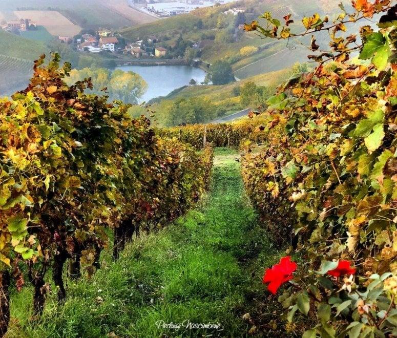 Scatti come dipinti: la magia dell'Oltrepo pavese in autunno