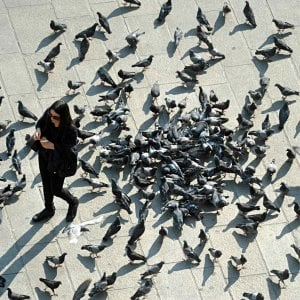 """Como, trasforma il balcone in piccionaia e il condominio protesta. Il sindaco: """"Multe per chi dà cibo agli uccelli"""""""