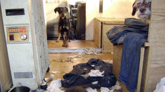 Livigno, bimbo di 5 anni lasciato solo in casa con 10 cani: affidato ai servizi sociali