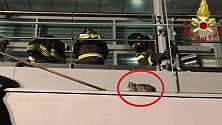 Gatto incastrato in modo  impossibile: i pompieri  smontano il finestrone  del centro commerciale