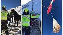 Sondrio, nevicata blocca mandria di cavalli: salvati con l'elicottero  ·   Foto