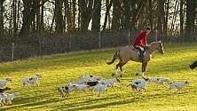 Lombardia, la Lega vuole  aprire la caccia alla volpe