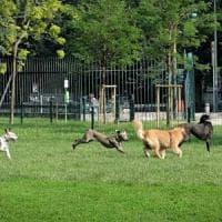 Milano, accoltella un anziano dopo una lite per il cane: arrestato 64enne