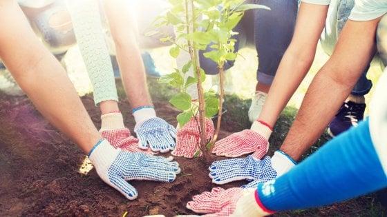 A Milano verranno piantati 16mila nuovi alberi: più dei bambini nati nel 2018