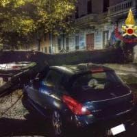 Milano, crolla un grosso albero sulla strada: auto danneggiate