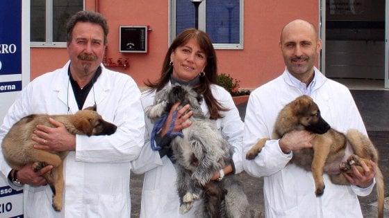 Milano: l'Ats apre le porte degli uffici a cani e gatti dei dipendenti