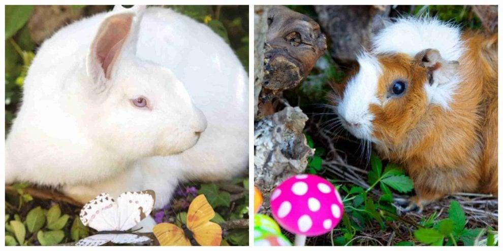 Monza: conigli, ratti e cavie diventano creature fatate nel calendario della onlus che salva gli animali da laboratorio