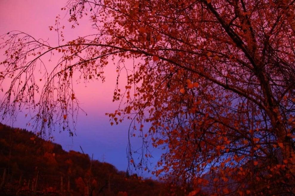Sondrio, il cielo rosa su Caiolo: tra foliage e rami spogli l'alba è un incanto
