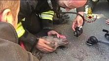Incendio in via Farini:    i pompieri rianimano    il cane intossicato   con le bombole d'ossigeno