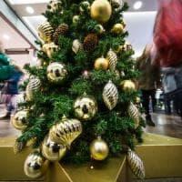 Brianza, il Comune ricicla gli alberi di Natale dei cittadini: