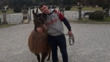 A passeggio con il lama nel centro di Varese: