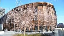 Voglia di primavera a Milano: a Porta Nuova fioriscono in anticipo i ciliegi