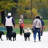 Un milione e 600mila cani e gatti in Lombardia:  il