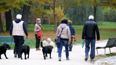 """Un milione e 600mila cani e gatti in Lombardia: il """"boom"""" degli ultimi 5 anni"""