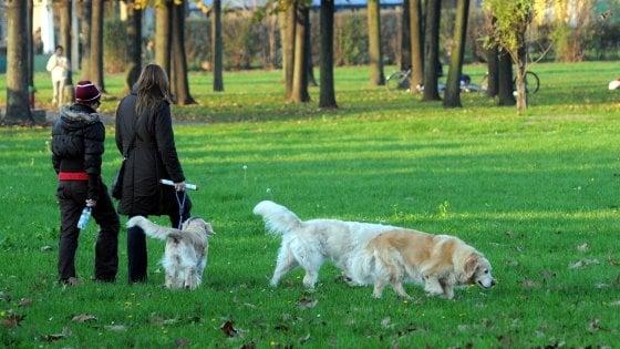 Cani senza guinzaglio nei parchi di Milano: sperimentazione negli orari con meno bambini in giro