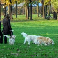 Cani senza guinzaglio nei parchi di Milano: sperimentazione negli orari