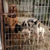 Cani e gatti rinchiusi senza acqua e tra la sporcizia: denunciato un 49enne della Bergamasca