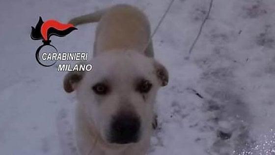 Il cane Balcho cerca casa: sequestrato a Milano al suo padrone clochard che lo prendeva a calci