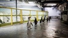 Il dietro le quinte dell'Acquario di Genova in mostra alle Officine fotografiche di Milano