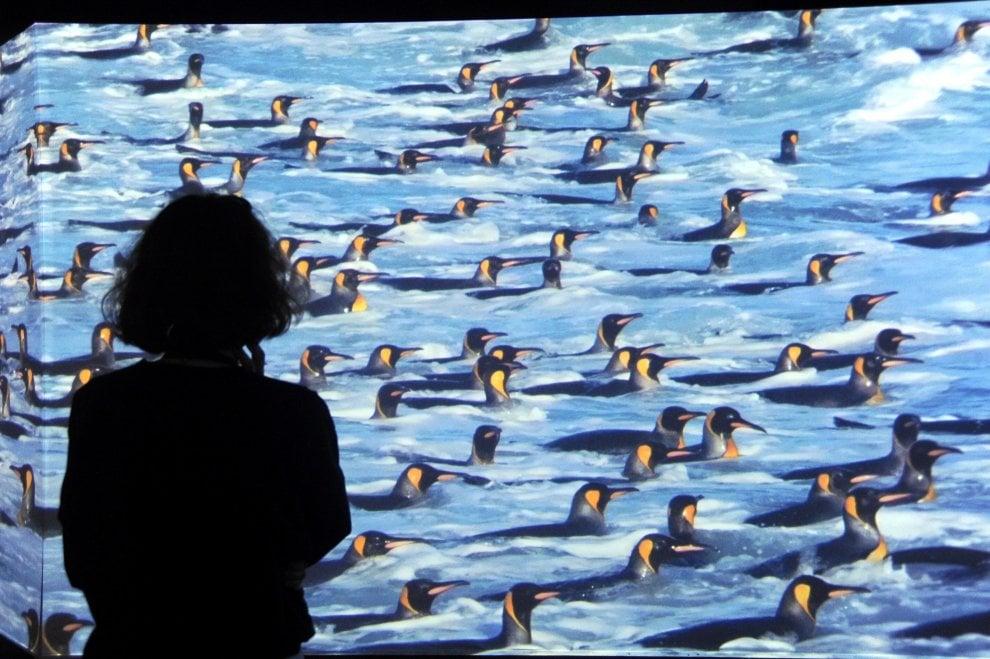 Il cambiamento climatico in mostra a Milano: gli scatti del National Geographic
