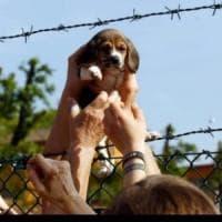 Brescia: è morta Vita, la cagnolina simbolo della lotta contro Green Hill