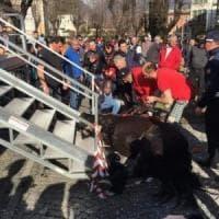Sondrio, cavallo cade mentre sale sul palco del Carnevale: la fotodenuncia su Facebook