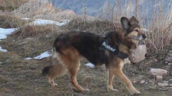 Cane scappa per i botti a Capodanno ma torna a casa due mesi dopo: la storia di Bonnie