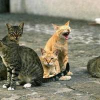 Uccide i gatti del cugino, condannato a un anno e otto mesi