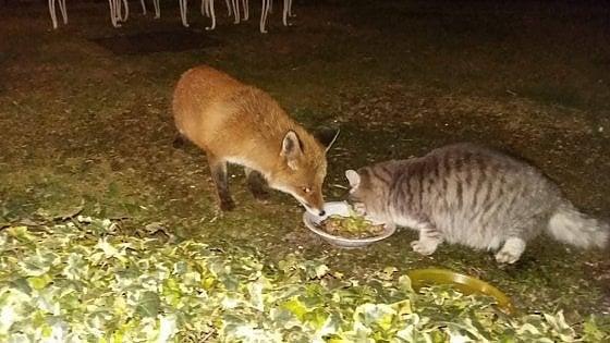 Il gatto e la volpe insieme, l'appuntamento è per cena