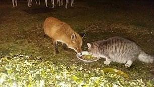 Il gatto e la volpe insieme metti una sera a cena