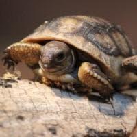 Zingonia, tra la sporcizia nel ristorante spunta anche una tartaruga d'acqua: licenza sospesa