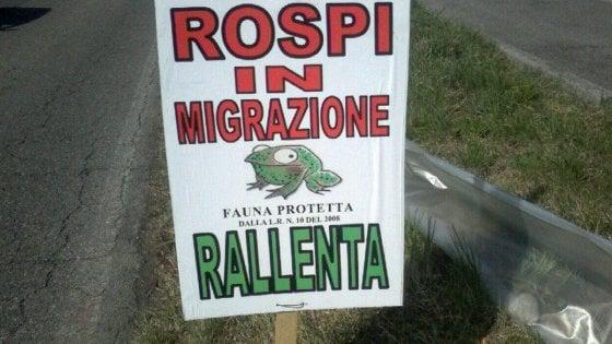 """""""Attraversamento rospi"""": nel comasco i cartelli dei volontari che aiutano gli anfibi a migrare"""