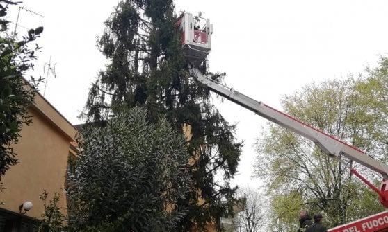 Gatto bloccato da due giorni su un albero di 10 metri: salvato da Enpa Milano e dai pompieri