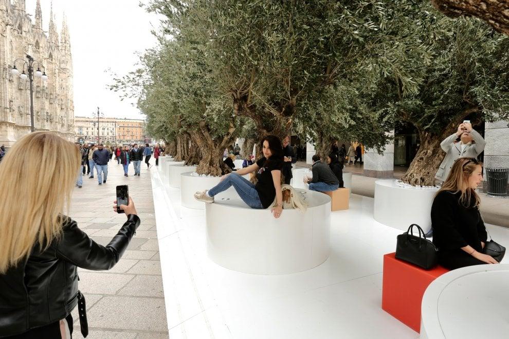 Fuorisalone, un bosco di ulivi secolari in pieno centro a Milano per la Design Week