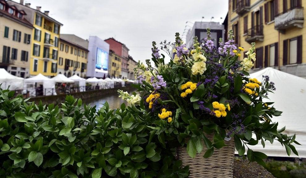 Il Naviglio Grande si riempie di fiori: la pioggia non ferma la fiera multicolore
