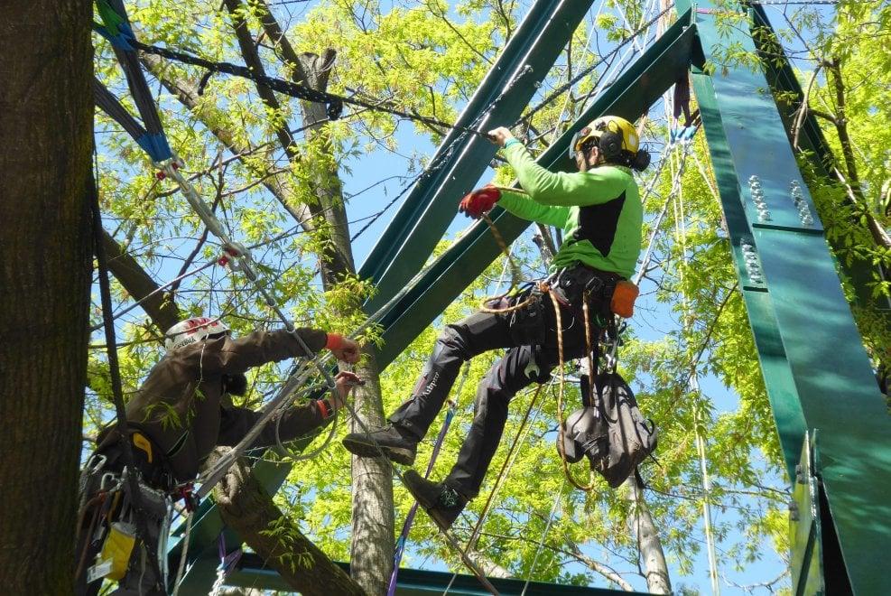 Gli uomini ragno in azione sulla quercia di piazza XXIV maggio a Milano