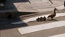 Anatroccoli in giro per Milano, il loro viaggio verso il naviglio